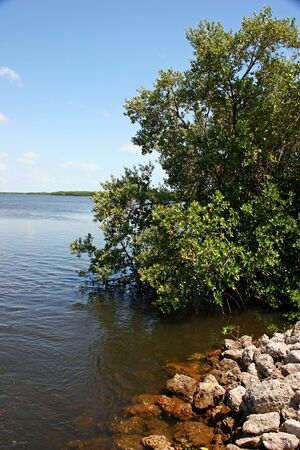 undeveloped: Scenic Landscape Ding Darling Wildlife Refuge Florida Stock Photo