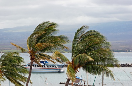 breezy: Tour Boat Behind Breezy Palm Trees on Ocean Maui Hawaii