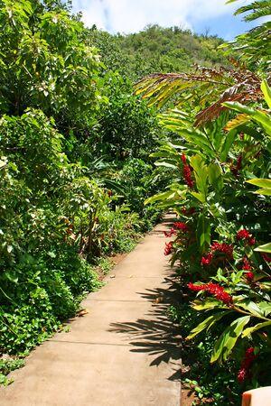 Beautiful Tropical Lush Fern Grotto Kauai Hawaii photo