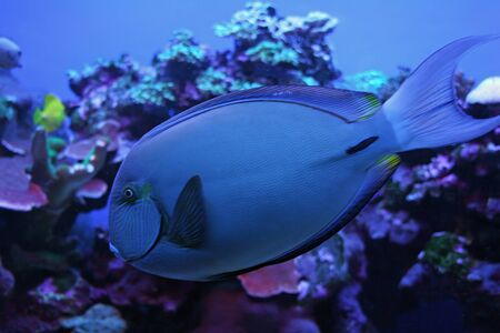 Colorful Tropical Pacific Fish in Aquarium Exhibit photo