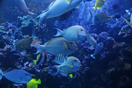 Colorful Tropical Pacific Fish in Aquarium Exhibit Stock Photo - 12028608