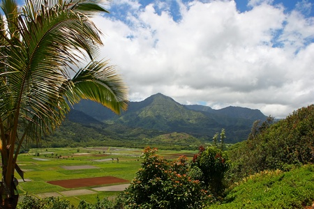 overlook: Overlook Landscape View of Beautiful Kauai Hawaii Island