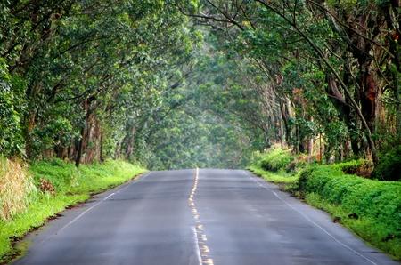 Weg in de schaduw van het bladerdak van Eucalyptusbomen Kauai Hawaii