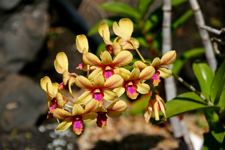 plantae: Beautiful Orchid Flowers Blooming in Vivid Color