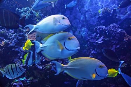 수족관 전시에서 화려한 열대 하와이 태평양 물고기