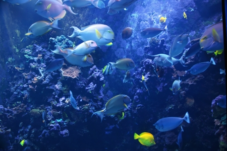 Colorful Tropical Pacific Fish in Aquarium Exhibit Stock Photo - 13994710
