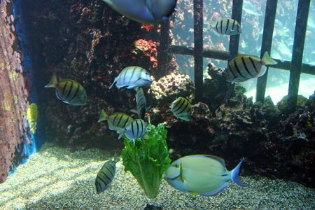 Colorful Tropical Pacific Fish in Aquarium Exhibit Stock Photo - 13994714