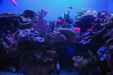 Colorful Tropical Hawaiian Pacific Fish in Aquarium Exhibit Stock Photo