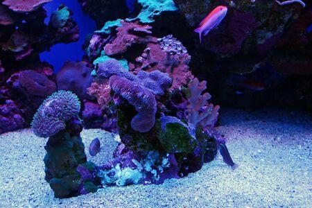 tank fish: Colorful Tropical Hawaiian Pacific Fish in Aquarium Exhibit Stock Photo