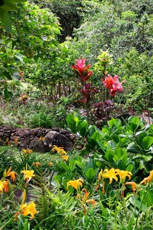 #14102989   Limahuli National Tropical Botanical Gardens Kauai Hawaii