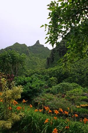 Limahuli National Tropical Botanical Gardens Kauai Hawaii Photo