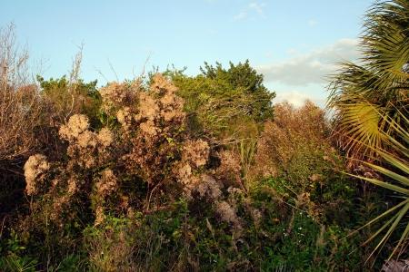 ding: Vegetation Landscape Ding Darling Wildlife Refuge Sanibel Florida