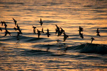 dawning: Birds In Flight Ocean Sanibel Florida Sunrise