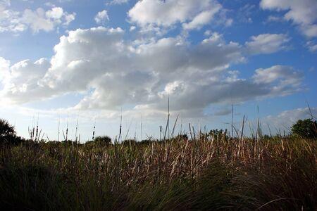 ding: Natural Landscape Ding Darling Wildlife Refuge Sanibel