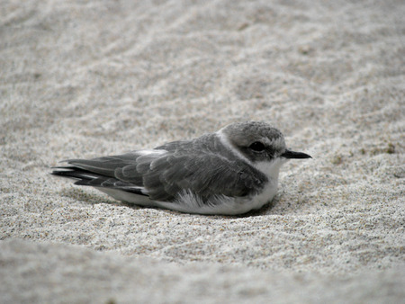 aviary: Beautiful Shorebird in Sandy Shore and Aviary Exhibit Stock Photo