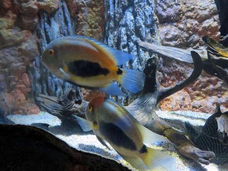 fish exhibition: Colorful Tropical Fish in an Indoor Aquarium Exhibit Stock Photo