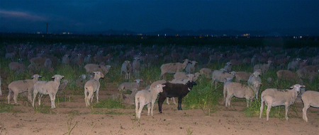 Counting the Sheep at Night Stock fotó