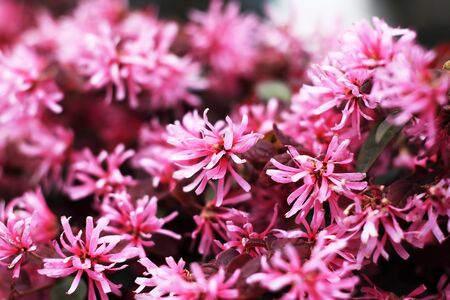 pink flowers Stock Photo - 8719375