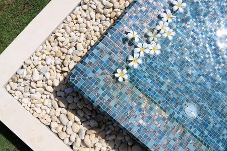 flowers floating in swimming pool  Stock Photo