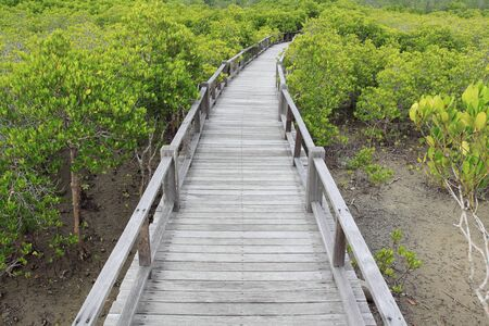 wood bridge go to mangrove forest  photo
