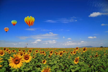sunflower field and Balloon  Stock Photo - 9112798