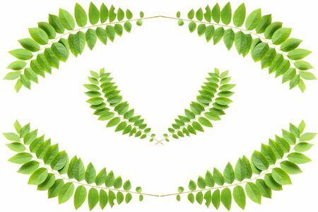 green leaf on white background Stock Photo - 9381720