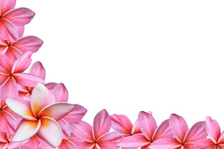 Frangipani or Plumeria flower Stock Photo - 9592823