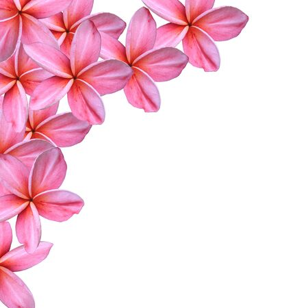 Frangipani or Plumeria flower Stock Photo