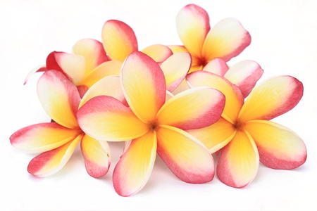 frangipani clock on white background photo