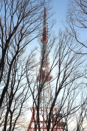 Telecommunication tower with tree photo