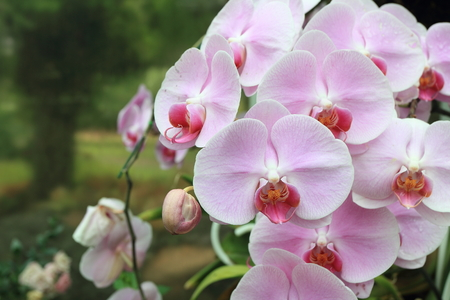 beautiful pink orchids over green leafs