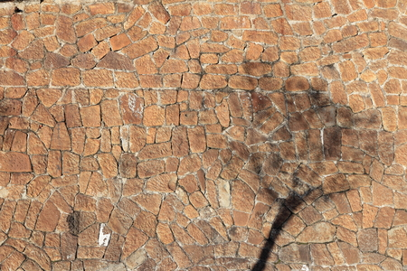 stone wall texture with shadow tree background