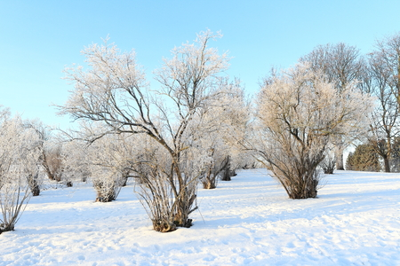 winter trees in the snow Stock Photo