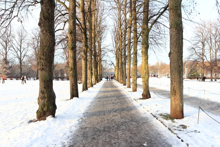 snowy walkway through winter forest Stock Photo