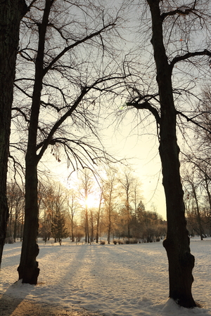Winter forest with sun shining through tree
