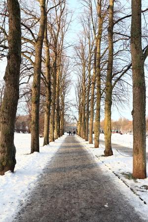 Snowy walkway through winter forest