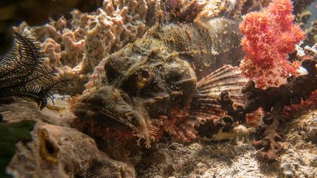 Indonesia underwater Stock Photo