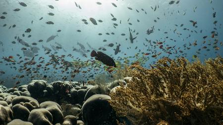 Indonesia dive Imagens