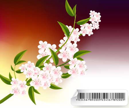 Aprikose und Kirschen Blüten Illustration.