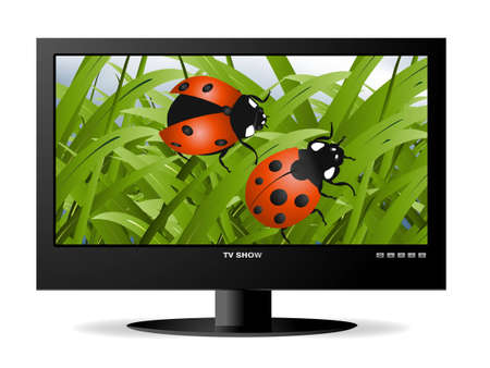dvi: frontal view of widescreen lcd monitor, and natural view for ladybugs on green grass.