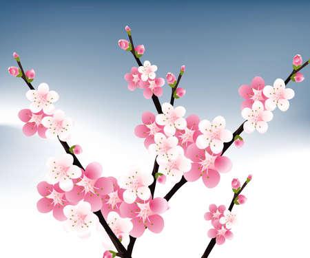 flor de durazno: albaricoque y flores de cerezas ilustraci�n.  Vectores