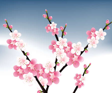 apricot: apricot and Cherries blossoms Illustration. Illustration