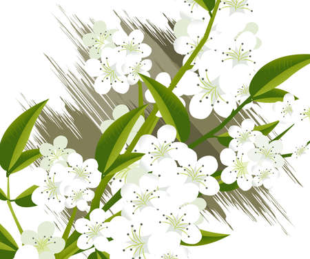 apricot and Cherries blossoms Illustration. illustration