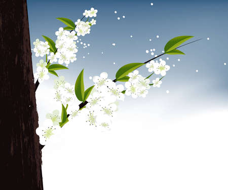 apricot and Cherries blossoms Illustration. Vector