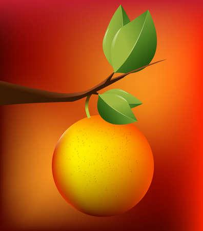 citrus tree: Ilustraci�n de arte naranja, mezclar con fondo