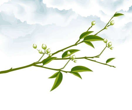 leafy: Tree Branch with Green Leaves .  Illustration