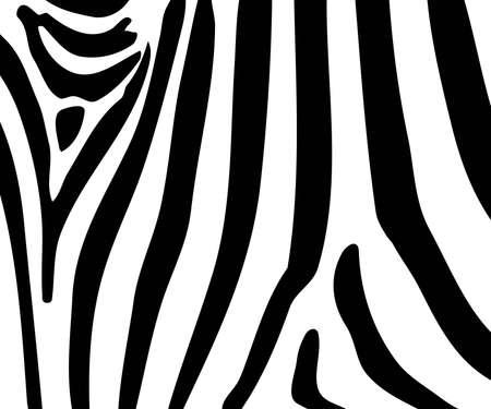 Illustration of black and white zebra stripes.   illustration