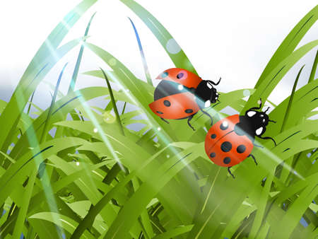 Bright red Lady Bug with green grass background photo