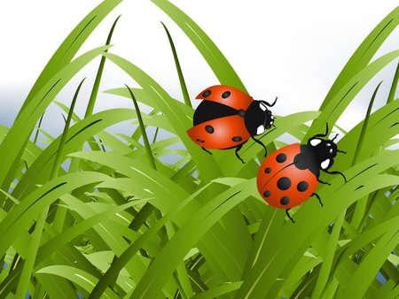 lady bug: Bright red Lady Bug mit gr�nem Gras Hintergrund