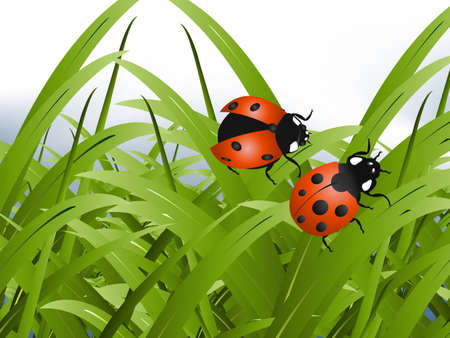 Bright red Lady Bug with green grass background Stock Vector - 8300165